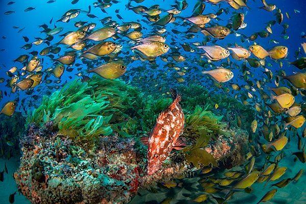Grid 2 Tauchreviere White Pearl Resort Mosambik Fische