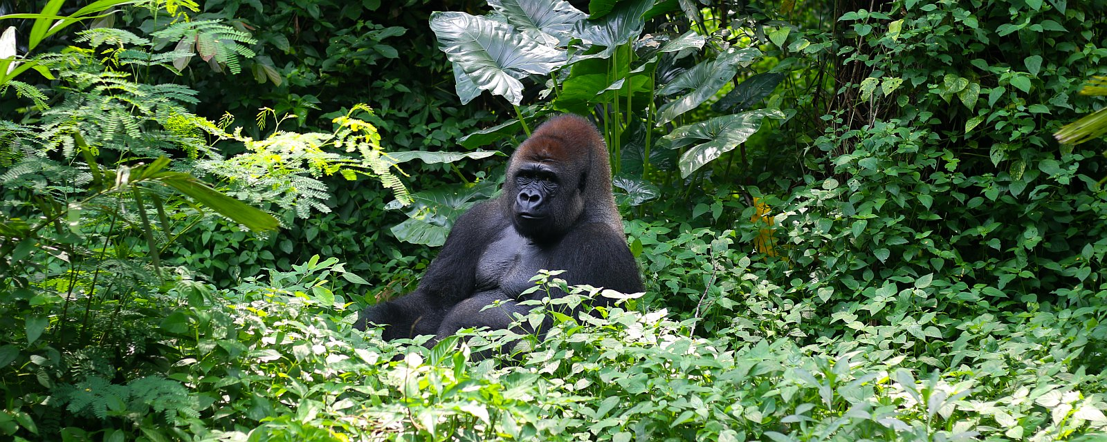 Mgahinga Gorilla Nationalpark Hotels